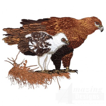 Hawk with Baby