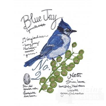 Bird221 Blue Jay Bird Study Embroidery Design