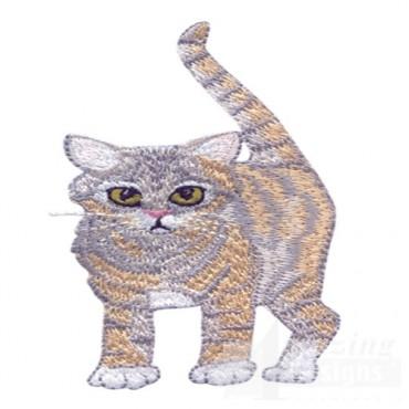 Kitten 8