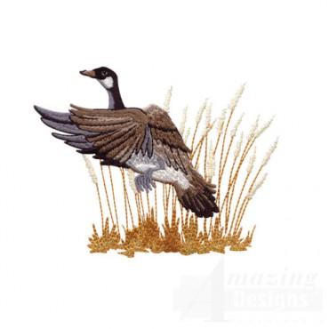 Goose Lifting Off