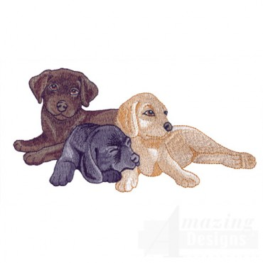 Black And Yellow Lab Pups 2