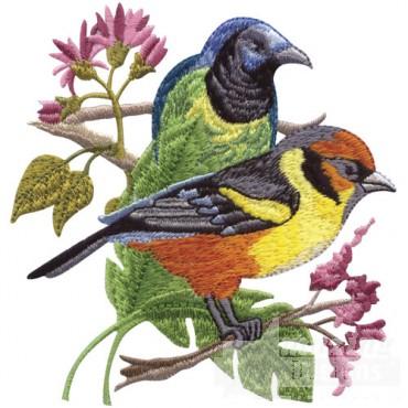 Tropical Birds On Branch 2