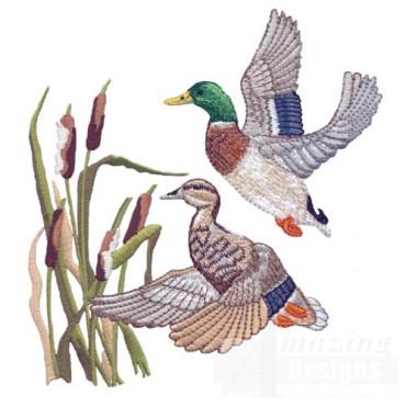 Flying Ducks 1