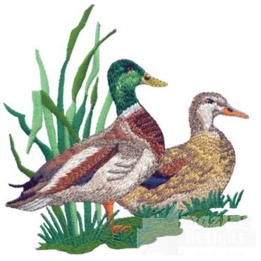 Duck Pair