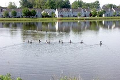 Image of Senior Horizons at Silver Lake