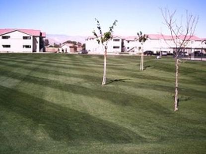 Image of Cedar Springs Apartments