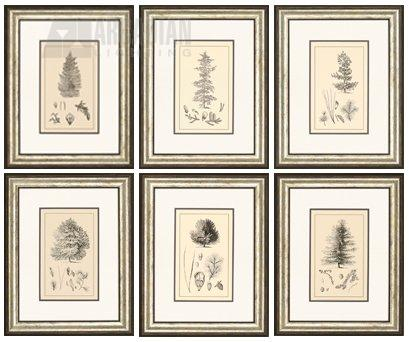 Paragon Picture Gallery 1942 Arbor Study Transitional Botanical ...
