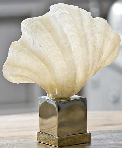 Clam in Natural Finish on Polished Nickel Stand