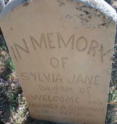 CHAPMAN, SYLVIA JANE - Apache County, Arizona | SYLVIA JANE CHAPMAN - Arizona Gravestone Photos