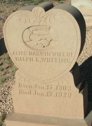 WHITING, ALICE DARWIN - Apache County, Arizona | ALICE DARWIN WHITING - Arizona Gravestone Photos
