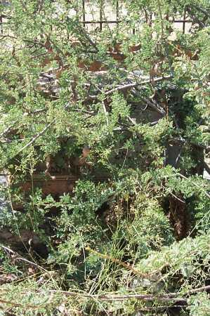 EAKER WATKINS, SALLY - Cochise County, Arizona | SALLY EAKER WATKINS - Arizona Gravestone Photos