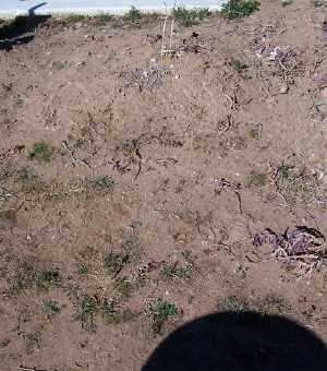 HERNANDEZ, FLORENCIO - Gila County, Arizona   FLORENCIO HERNANDEZ - Arizona Gravestone Photos