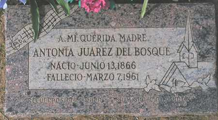 BOSQUE, ANTONIA JUAREZ - Maricopa County, Arizona | ANTONIA JUAREZ BOSQUE - Arizona Gravestone Photos
