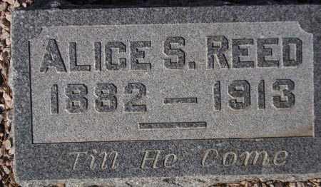 REED, ALICE S. - Maricopa County, Arizona | ALICE S. REED - Arizona Gravestone Photos