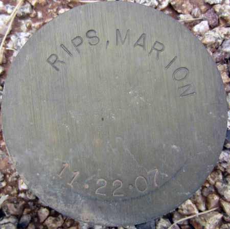 RIPS, MARION - Maricopa County, Arizona | MARION RIPS - Arizona Gravestone Photos