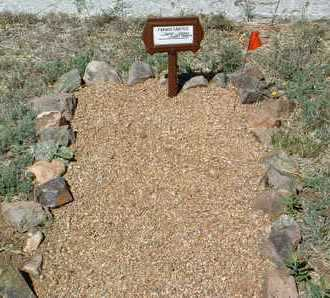 CARTTER, FRANKIE - Yavapai County, Arizona | FRANKIE CARTTER - Arizona Gravestone Photos