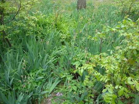 *HEIRLOOM PLANTS PHOTO 2,  - Faulkner County, Arkansas |  *HEIRLOOM PLANTS PHOTO 2 - Arkansas Gravestone Photos