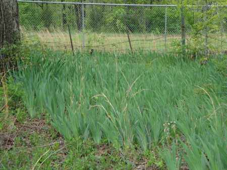 *OVERVIEW 3 WITH HEIRLOOM IRIS,  - Faulkner County, Arkansas |  *OVERVIEW 3 WITH HEIRLOOM IRIS - Arkansas Gravestone Photos