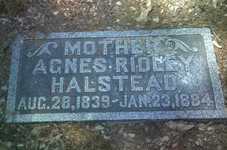 HALSTEAD, AGNES - Jackson County, Arkansas | AGNES HALSTEAD - Arkansas Gravestone Photos