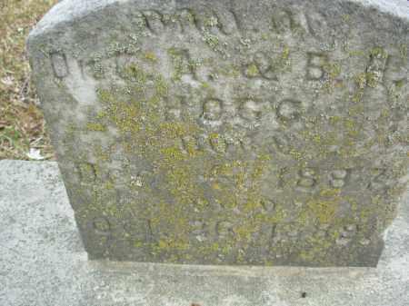 HOGG, DAUGHTER - Jefferson County, Arkansas   DAUGHTER HOGG - Arkansas Gravestone Photos