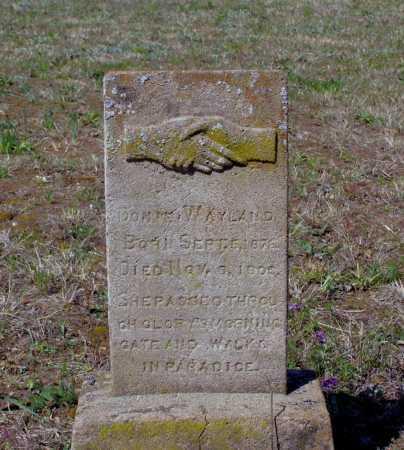 "WAYLAND, E. CALDONIA ""DONIE"" - Lawrence County, Arkansas | E. CALDONIA ""DONIE"" WAYLAND - Arkansas Gravestone Photos"