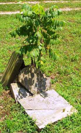 ROGERS, SARAH - Madison County, Arkansas | SARAH ROGERS - Arkansas Gravestone Photos