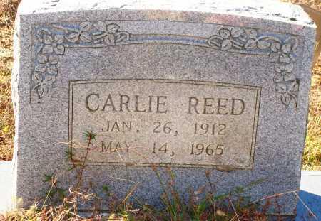 REED, CARLIE - Newton County, Arkansas   CARLIE REED - Arkansas Gravestone Photos