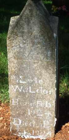 WALDEN, SILVIE - Newton County, Arkansas   SILVIE WALDEN - Arkansas Gravestone Photos