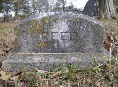 REED, CALLEDONIA - Polk County, Arkansas | CALLEDONIA REED - Arkansas Gravestone Photos
