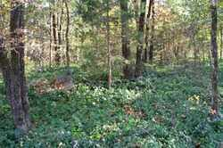 *BEGUM CEMETERY OVERVIEW,  - Sebastian County, Arkansas |  *BEGUM CEMETERY OVERVIEW - Arkansas Gravestone Photos