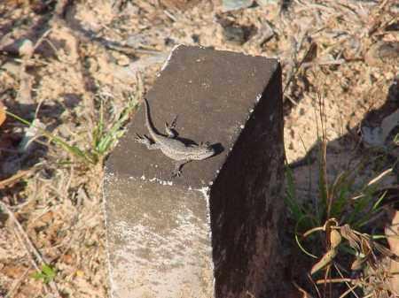 *LIVINGSTON CREEK CEMETERY,  - Stone County, Arkansas |  *LIVINGSTON CREEK CEMETERY - Arkansas Gravestone Photos