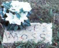MOSS, MARY F MOLLY - Stone County, Arkansas | MARY F MOLLY MOSS - Arkansas Gravestone Photos