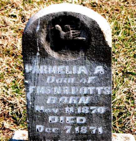 POTTS, PARMELIA  A. - Boone County, Arkansas | PARMELIA  A. POTTS - Arkansas Gravestone Photos