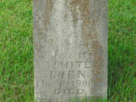 WHITE, DELBERT - Boone County, Arkansas | DELBERT WHITE - Arkansas Gravestone Photos