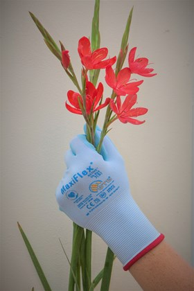 Gardening Gloves Size 7 (red cuff)