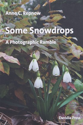Some Snowdrops -  A Photographic Ramble