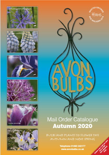 autumn 2020 cover.png