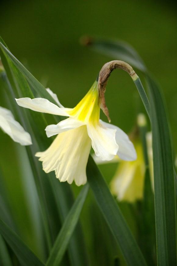 Narcissus W.P. Milner (1)