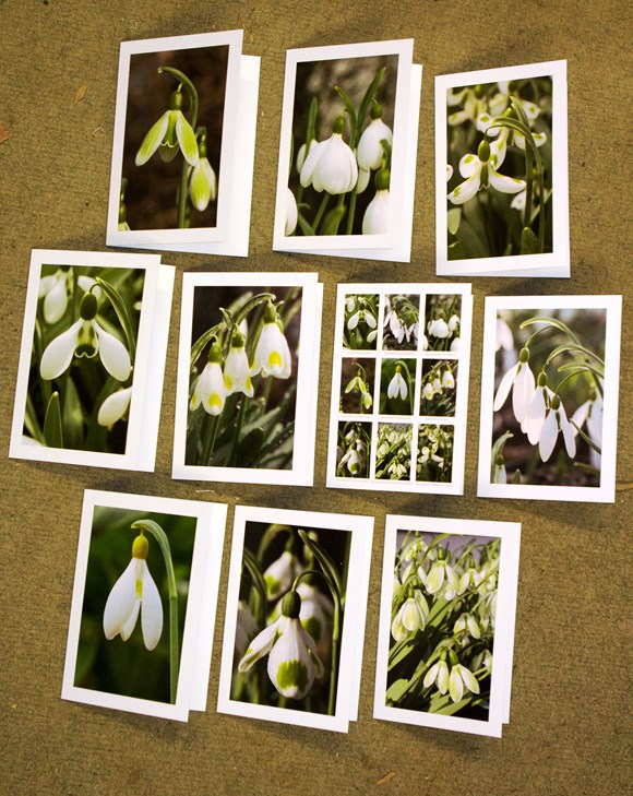 Set of 10 cards (Viridian series)