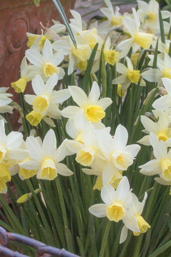 Narcissus Sailboat (7)