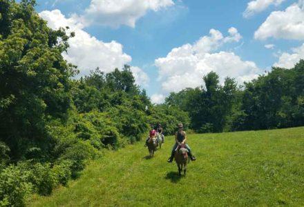 Horseback ride, First Farm Inn, ride horses