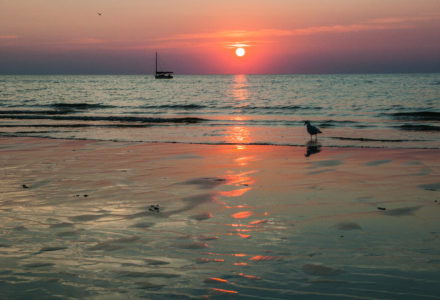 Sunset on Crosby Landing beach with a bird and sailboat in the background