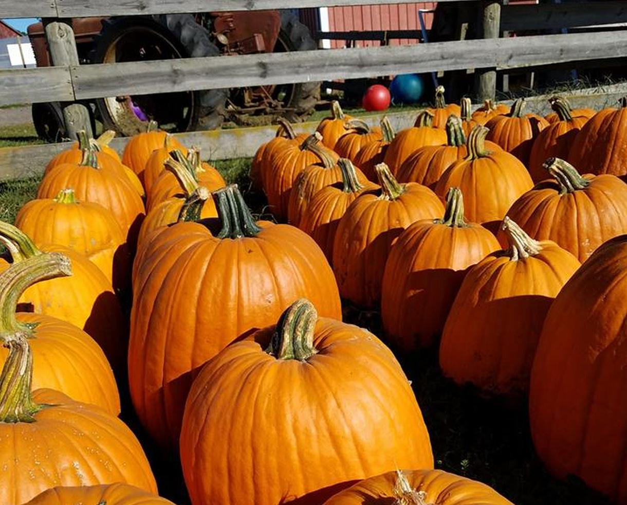 TLV Tree Farm Pumpkin Patch Package for Two People