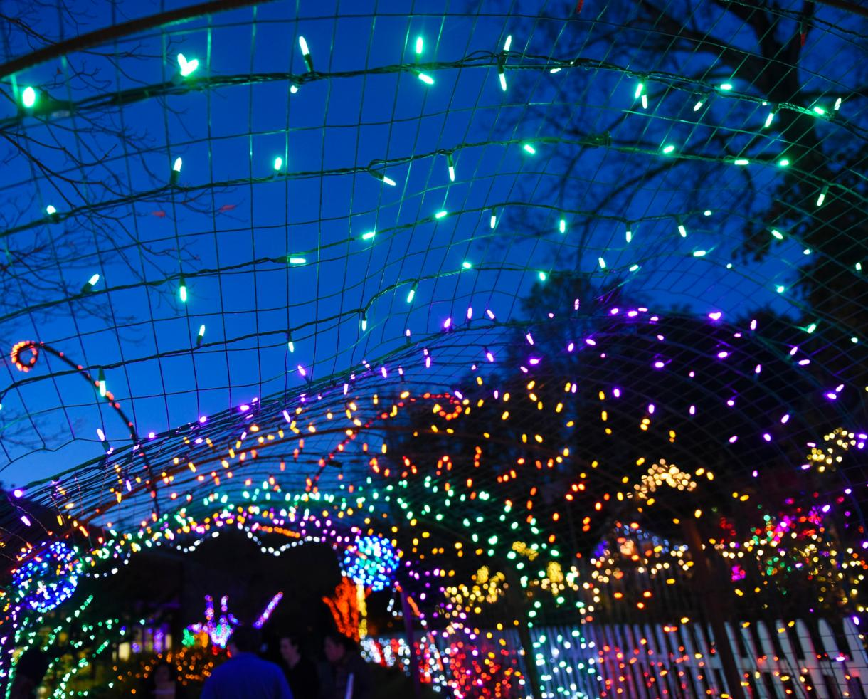 $20 for Garden of Lights Admission for One Car at Brookside Gardens in Wheaton (20% Off)