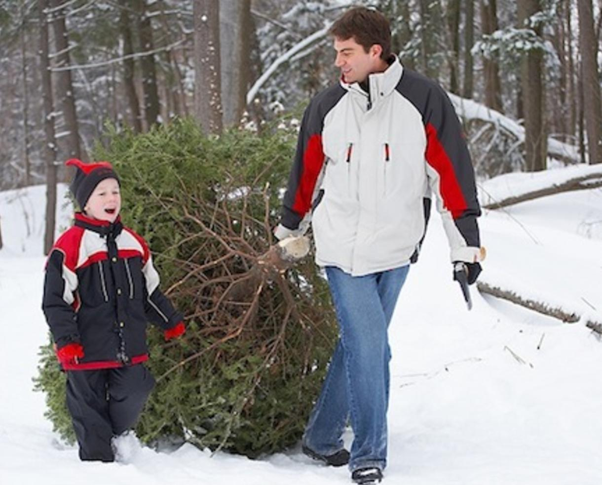$70 for Cut-Your-Own Christmas Tree at Ridgefield Farm & Orchard (up to $125 value – 44% off)