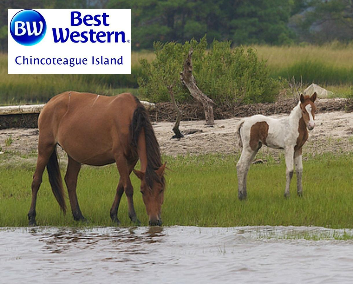 2-Night Chincoteague Island, VA Escape with Hot Breakfast Daily - Valid May 28 - June 28, 2018
