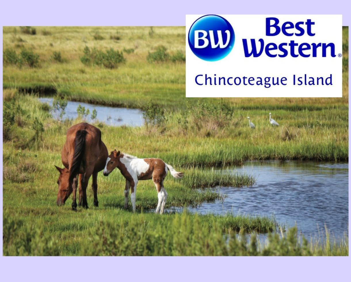 $282+ for 2-Night Chincoteague Island, VA Escape with Hot Breakfast Daily - Valid through AUGUST! (Up to 28% Off)