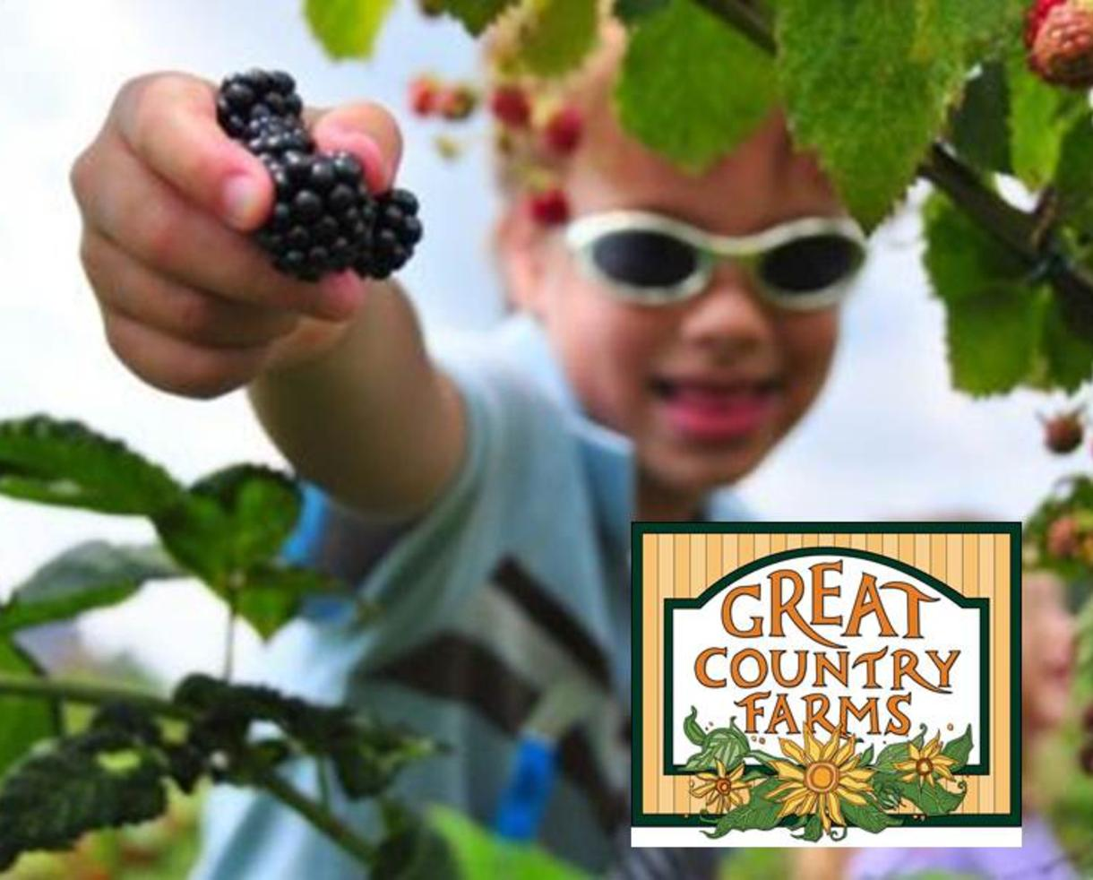 $5 for Great Country Farms Admission - BLACKBERRY PICKING !! (60% Off)