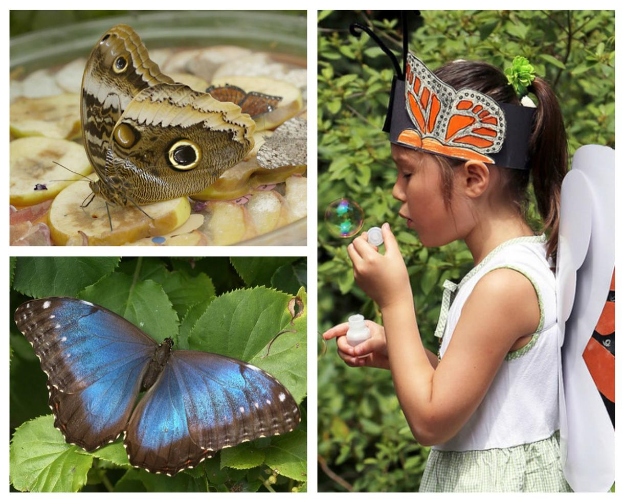 $8 for TWO Admissions to Wings of Fancy Butterfly & Caterpillar Exhibit beginning July 4, 2017 - Brookside Gardens in Wheaton ($16 Value - Up to 50% Off)
