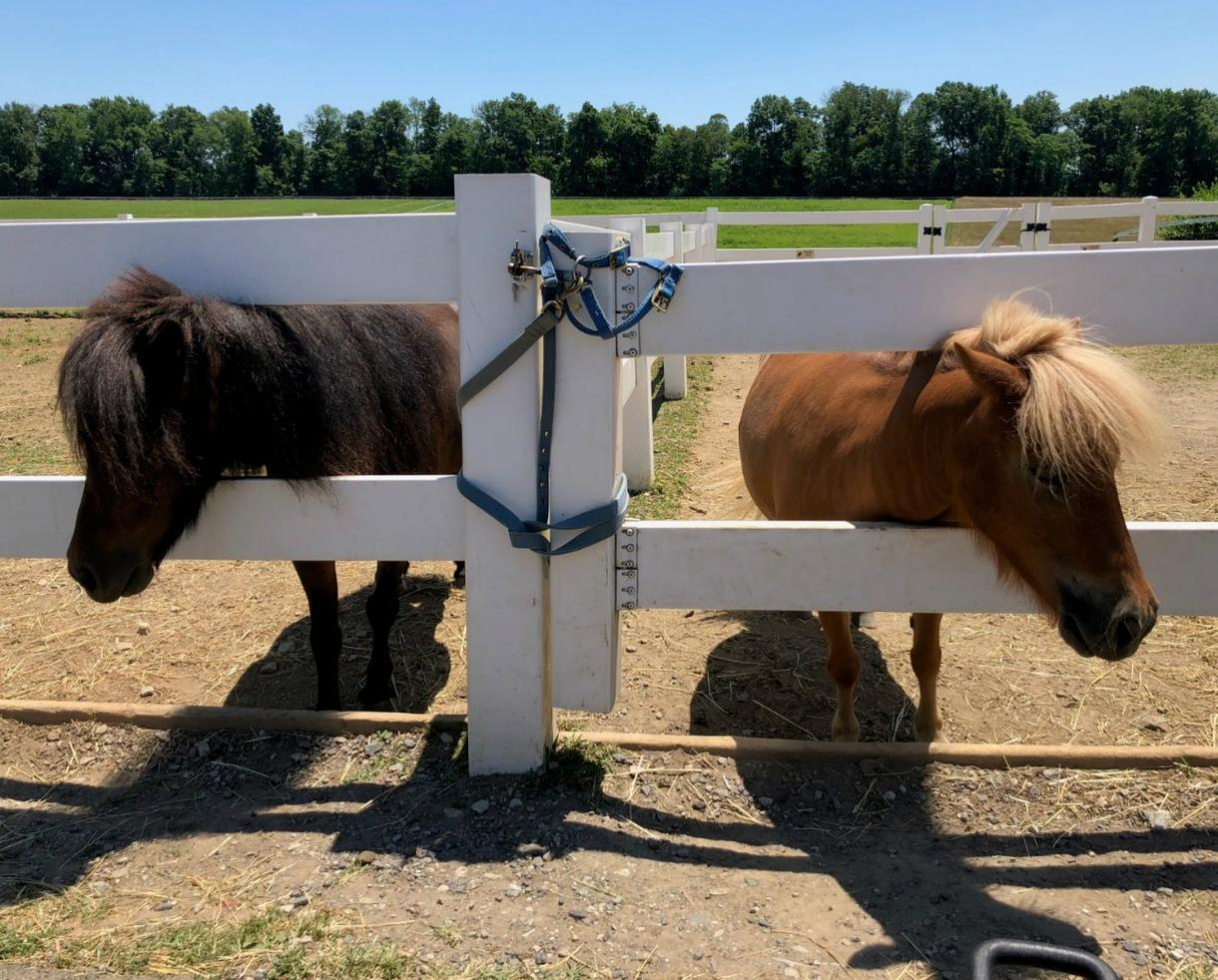 2 Admissions to Land of Little Horses Farm Park